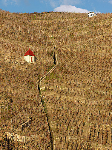 bare-hillsides-of-vines-cote-rotie1