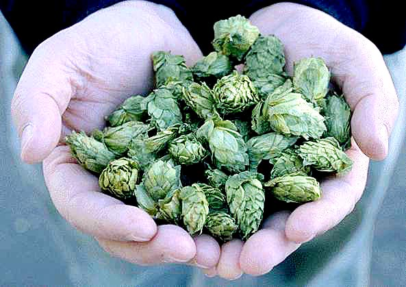 handful-of-hops
