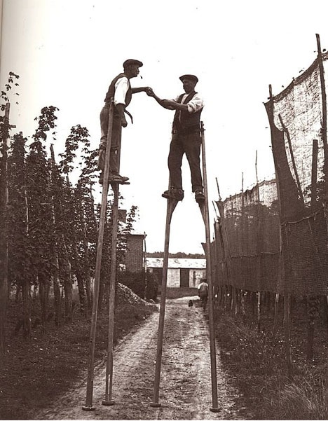 hops-pickers-on-stilts